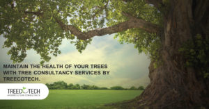 Tree Service Consultancy
