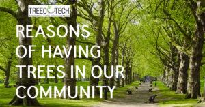 Trees Community