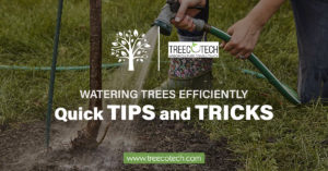 Quick Tips and Tricks for Watering Trees Efficiently