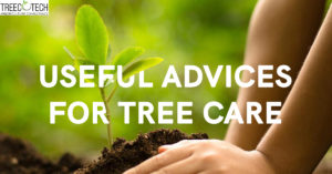 Useful Advices for Tree Care