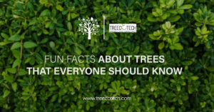 Fun Facts About Trees That Everyone Should Know