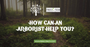 How Can an Arborist Help You by treecotech