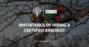 Importance of Hiring a Certified Arborist