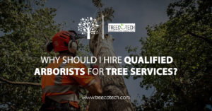 Why Should I Hire Qualified Arborists for Tree Services