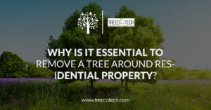 Why is it Essential to Remove a Tree Around Residential Property