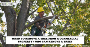 When to Remove a Tree from a Commercial Property