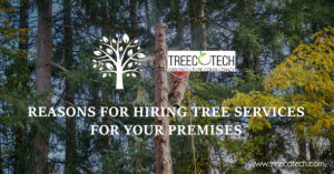 Reasons for Hiring Tree Services for Your Premises