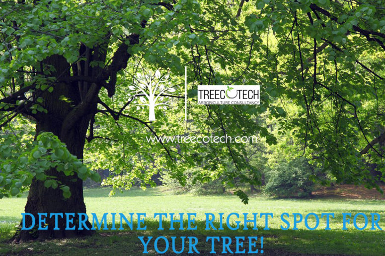 Determine The Right Spot for Your Tree