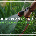 Watering Plants and Trees: Save or Take Plant's Life