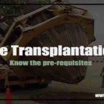 looking for tree transplantation
