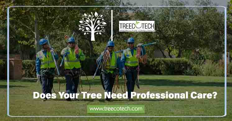 When Does Your Tree Need Professional Care?