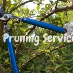 Tree Purring Services