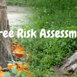 Tree Risk Assessment