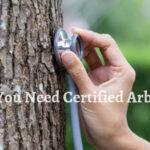 Arborist in India