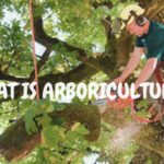 WHAT IS ARBORICULTURE?