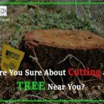 Cutting a Tree Near You